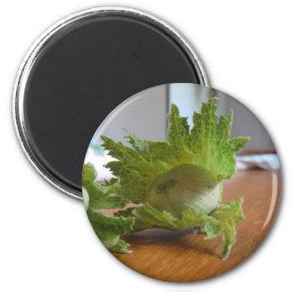 Aimant Noisettes vertes fraîches sur une table en bois
