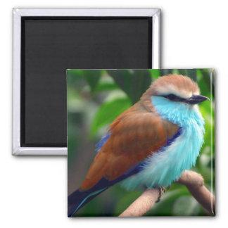Aimant Oiseau coloré