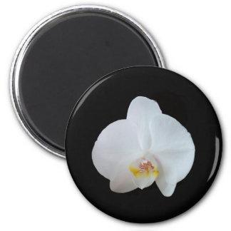 Aimant Orchidée blanche sur le fond noir