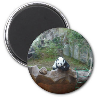 Aimant Ours panda