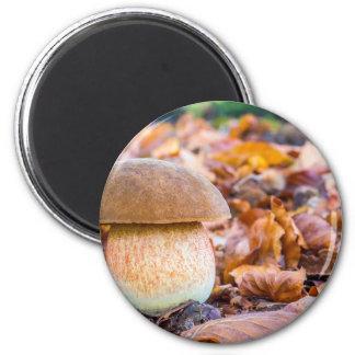 Aimant Pain d'écureuil de champignon avec le feuille dans