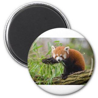 Aimant Panda rouge mangeant la feuille verte