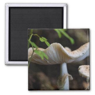 Aimant Parapluie de champignon