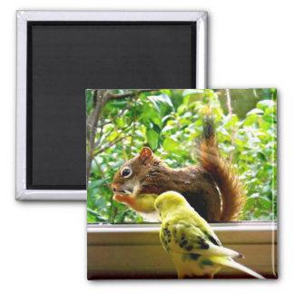 Aimant Perruche et écureuil rouge