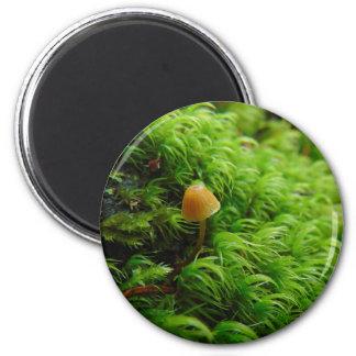 Aimant Petit champignon minuscule