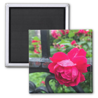 Aimant Photo de porte de jardin de rosée de gouttes de