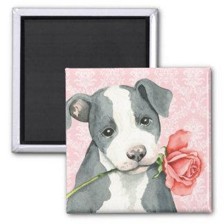 Aimant Pitbull rose de Valentine