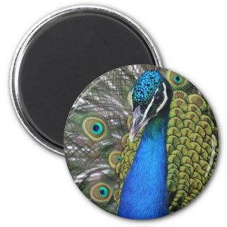 Aimant Plumes bleues et vertes lumineuses du paon W
