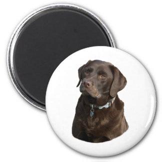 Aimant Portrait de photo de chien de Labrador de chocolat
