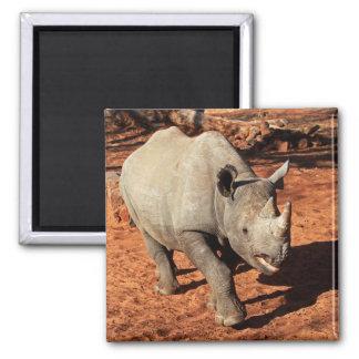 Aimant Portrait noir de rhinocéros
