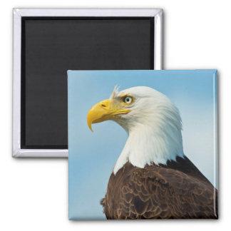 Aimant Profil d'Eagle chauve