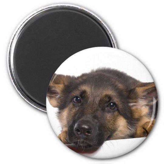 Aimant puppy German shepherd