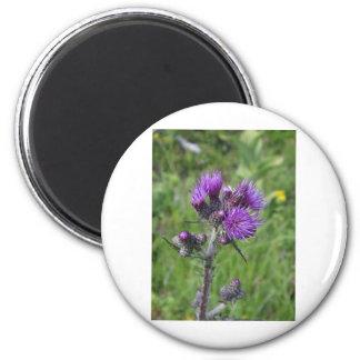 Aimant purple thistle