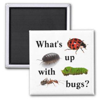 Aimant Qu'est avec des insectes ? l'aimant