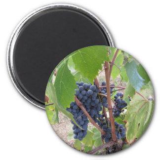Aimant Raisins rouges sur la vigne avec le feuille vert
