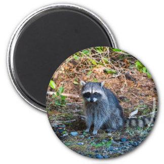 Aimant Raton laveur à l'état du parc WA de défi de point