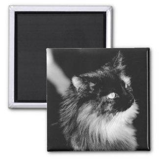 Aimant Roi de chat de l'abri - noir et blanc original