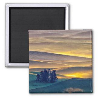 Aimant Rolling Hills de blé au lever de soleil | WA