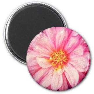 Aimant rond de fleur rose de dahlia