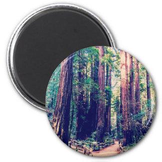 Aimant Séquoias de Californie