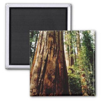 Aimant Séquoias Yosemite