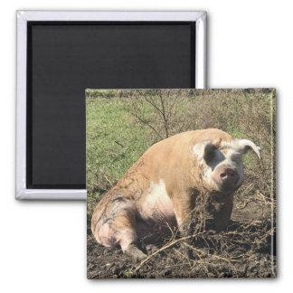 Aimant - Sheila mon grand gros porc