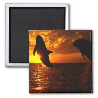 Aimant Symphonie de dauphins au coucher du soleil