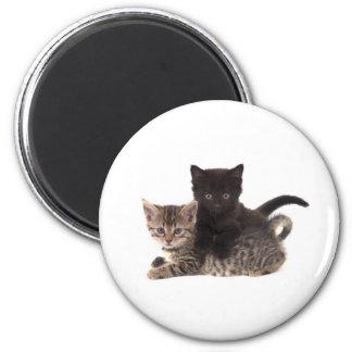 Aimant tabby kitten black kitten