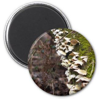 Aimant tree_moss_winter mushroom_downed