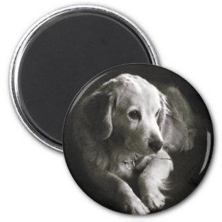 Aimant triste noir et blanc du chien |