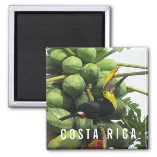 Aimant tropical de souvenir de toucan du Costa