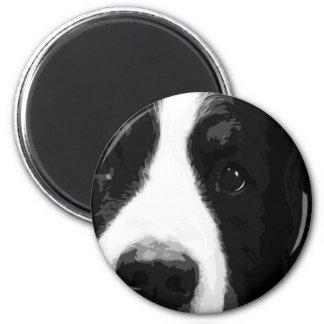 Aimant Un chien de montagne de Bernese noir et blanc