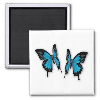Aimant Une paire de papillons bleus tropicaux