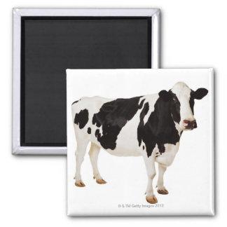 Aimant Vache du Holstein (Taureau de Bos)