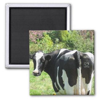 Aimant Vache néerlandaise numéro 52 regardant derrière