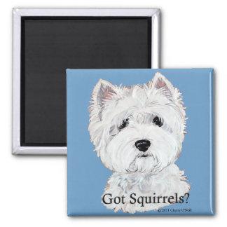 Aimant Westie a obtenu des écureuils ?