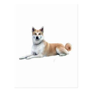 Akita (Akita Inu) - se couchant Cartes Postales
