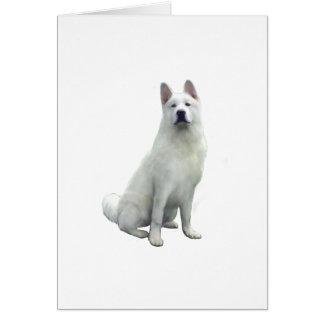 Akita - blanc carte de vœux