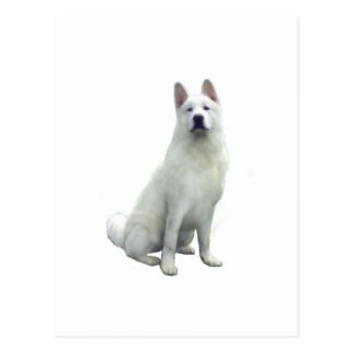 Akita - blanc carte postale