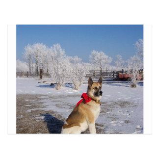 akita dans snow.png cartes postales