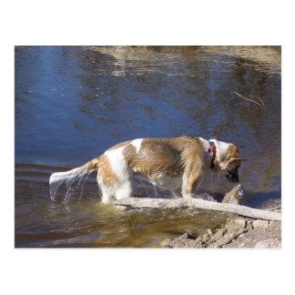 akita dans water.png carte postale