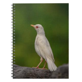 Albinos Robin au point de couronne Carnet