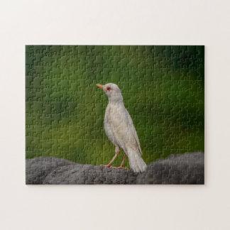 Albinos Robin au point de couronne Puzzle