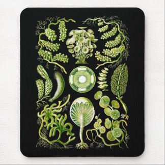 Algues Tapis De Souris