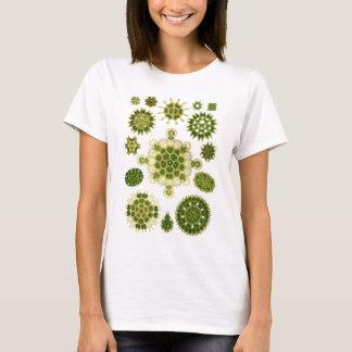 Algues vertes t-shirt