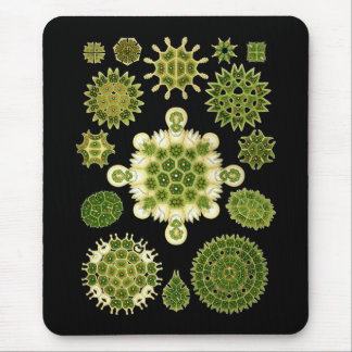 Algues vertes tapis de souris