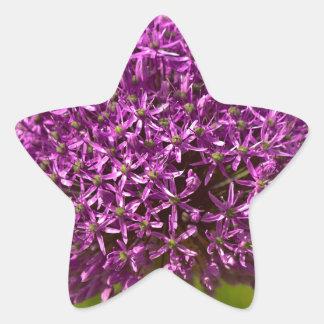 ALIUM rose vif Sticker Étoile