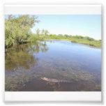 Allée d'alligator  tirage photo