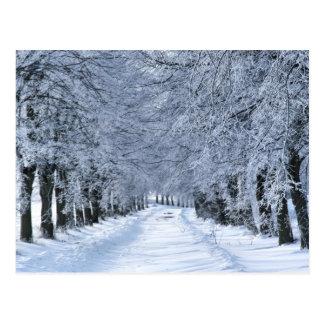 Allée d'hiver carte postale