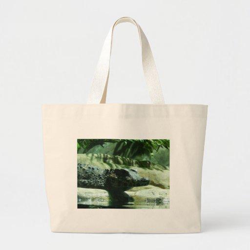 alligator de caiman sac